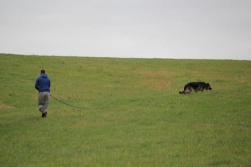 This is a picture of Bruce and Sasha with our tracking fields. You can see what great tracking fields we have!