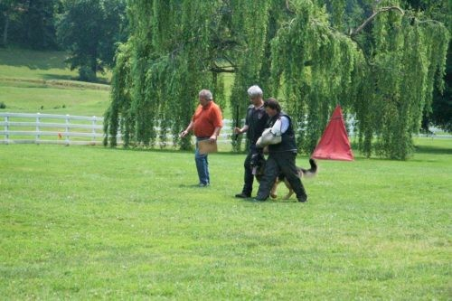 Craig got Moses as a puppy from Misty Ridge. He now has his Schutzhund 3 and his FH 2. Great for a first time handler.
