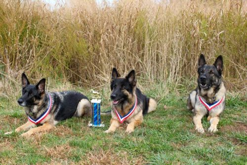 Shone and Monk got TR2's. Sasha got her IPO 2 and a trophy for High 2!