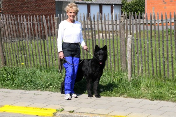 German Shepherd Training | Schutzhund Protection Training MD