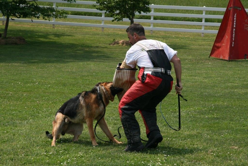 German Shepherd Training | Schutzhund Protection Training MD & DC